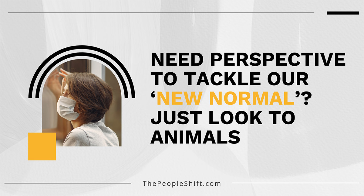"""Featured image for """"Need Perspective to Tackle Our 'New Normal'? Just Look to Animals"""""""